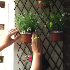 colgamos las plantas