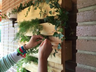 sacamos las plantas por los agujeros con cuidado