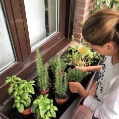 03-huerto-de-otono-planteamos-las-plantas