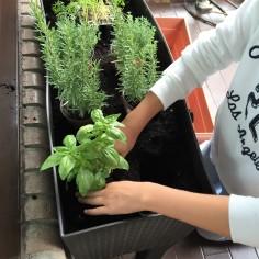 09-huerto-de-otono-colocamos-las-plantas-en-el-agujero