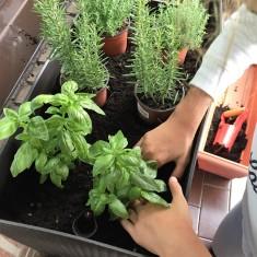11-huerto-de-otono-ajustamos-bien-las-plantas