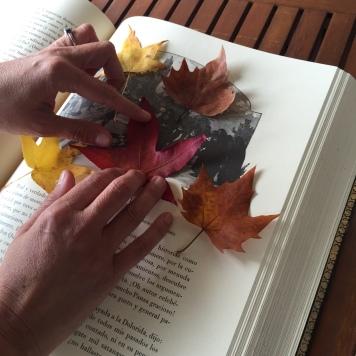 hojas día 1