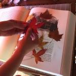 hojas dia 2