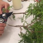 cortamos las ramas de pino